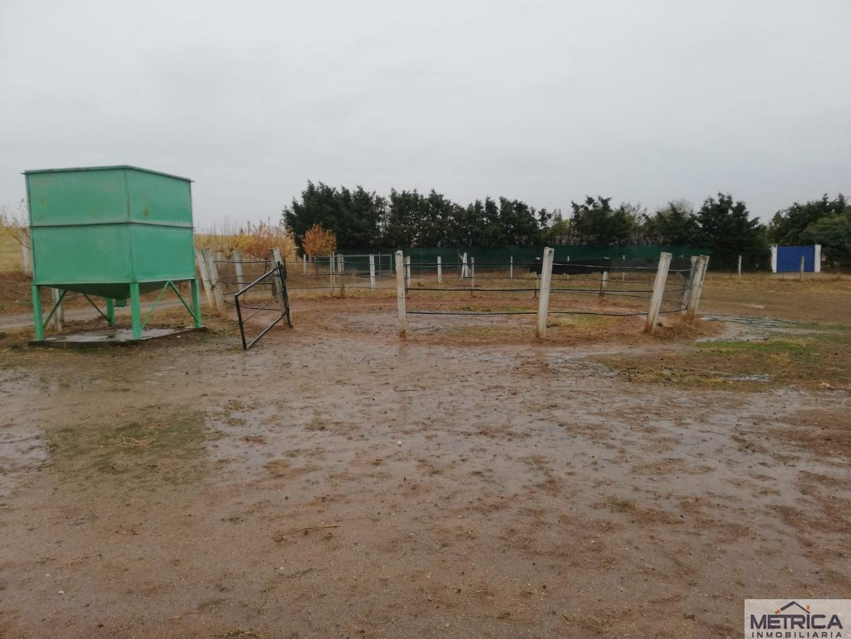 For sale of rural property in Arapiles
