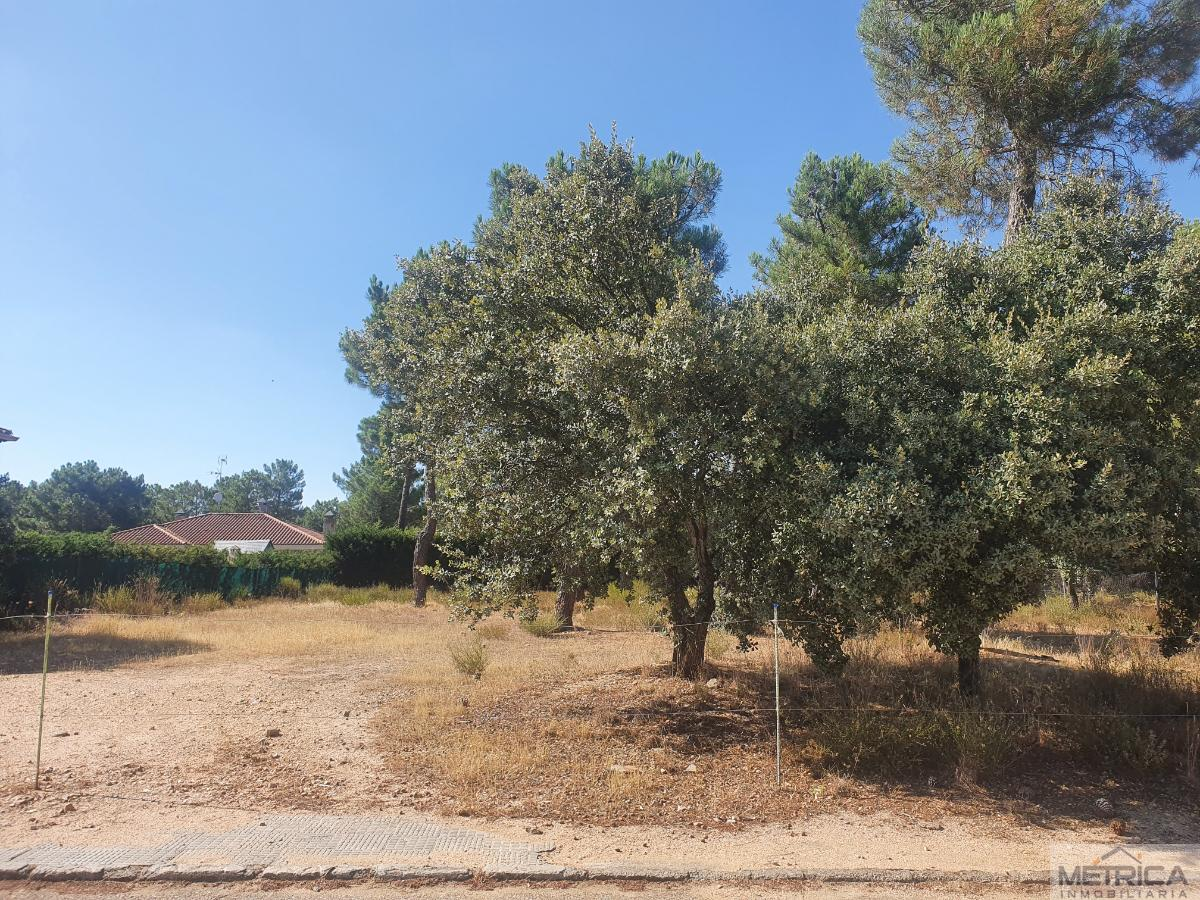 For sale of land in Salamanca