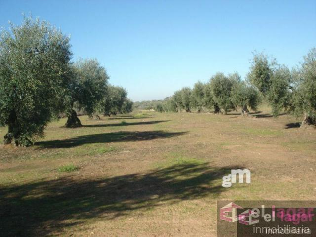 For sale of land in Montijo