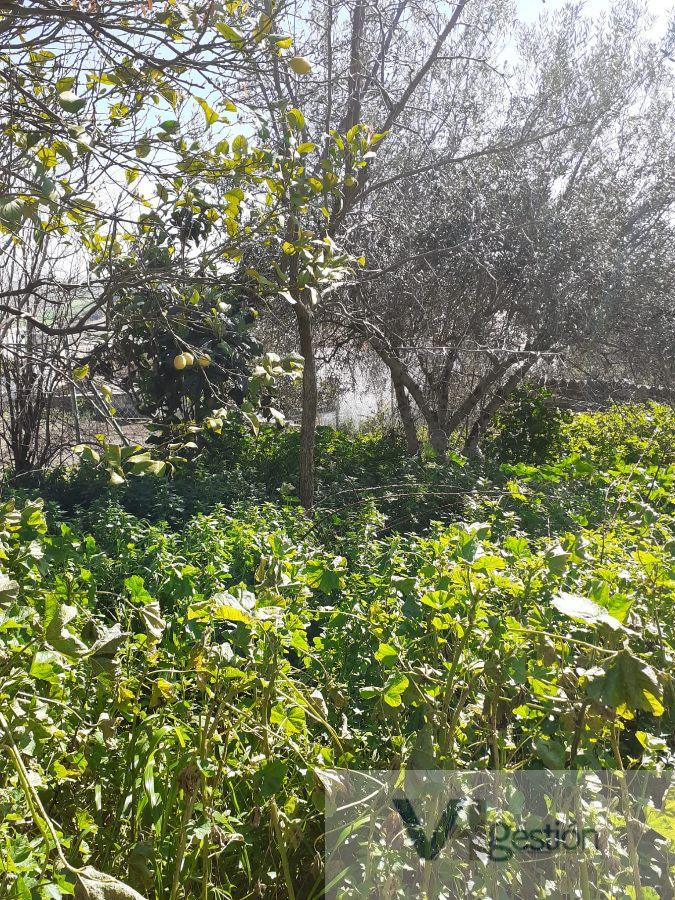 For sale of land in Espera