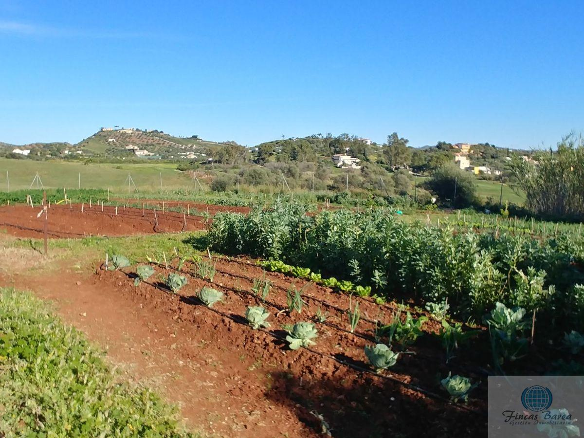 For sale of rural property in Mijas Costa