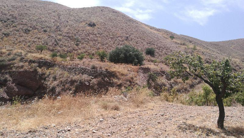 For sale of land in Taberno