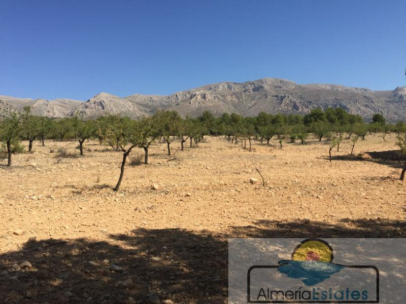 For sale of rural property in Chirivel