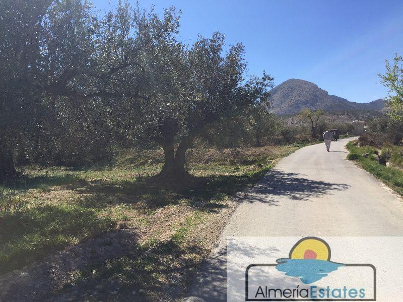Venta de terreno en Vélez-Blanco