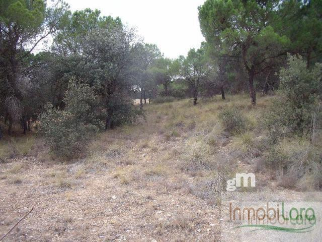 For sale of rural property in Tarazona de la Mancha