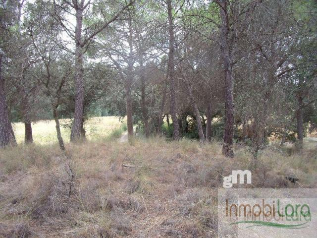 Venta de finca rústica en Tarazona de la Mancha