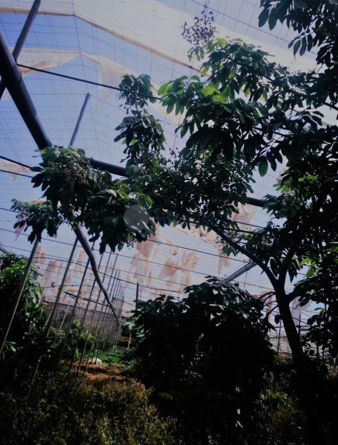For sale of rural property in La Laguna