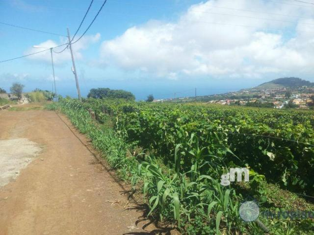 For sale of land in Tacoronte