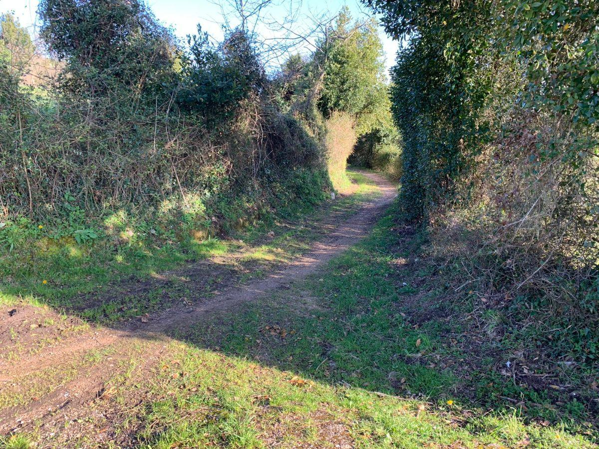 For sale of land in Siero