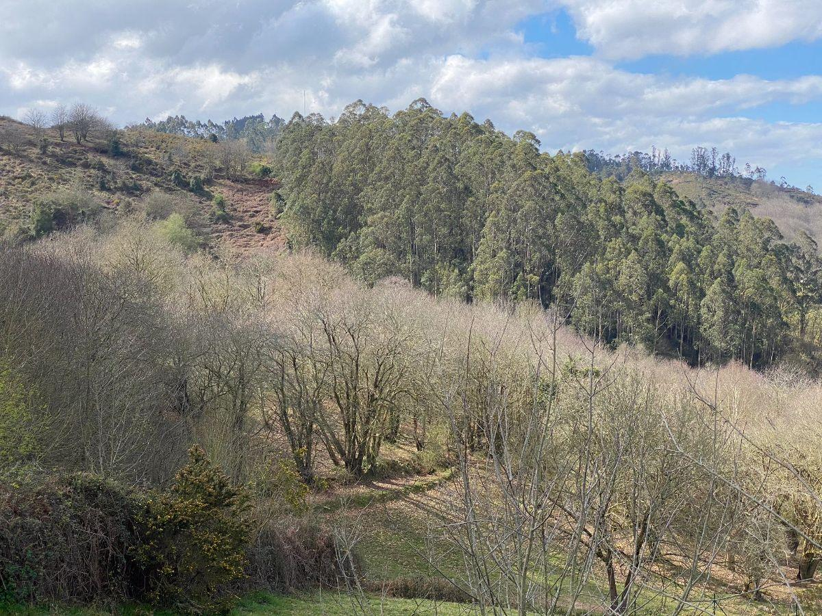 For sale of rural property in Siero