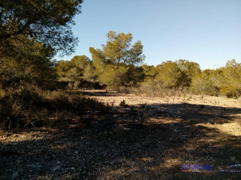 For sale of rural property in Pilar de la Horadada