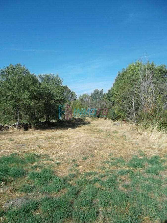 For sale of land in Carrascal de la Cuesta