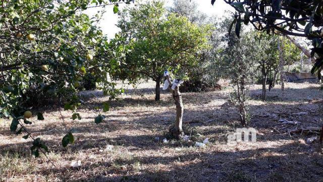 Venta de terreno en Sanlúcar de Barrameda