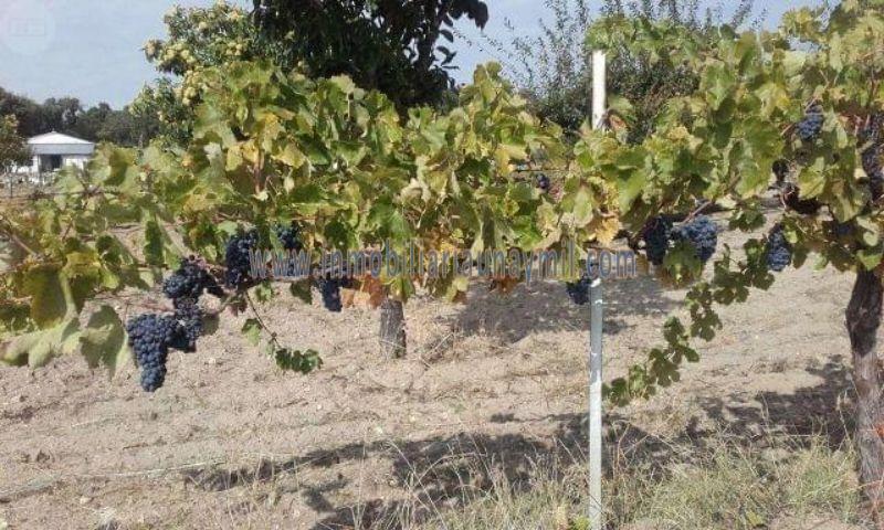Venta de terreno en Zamayón