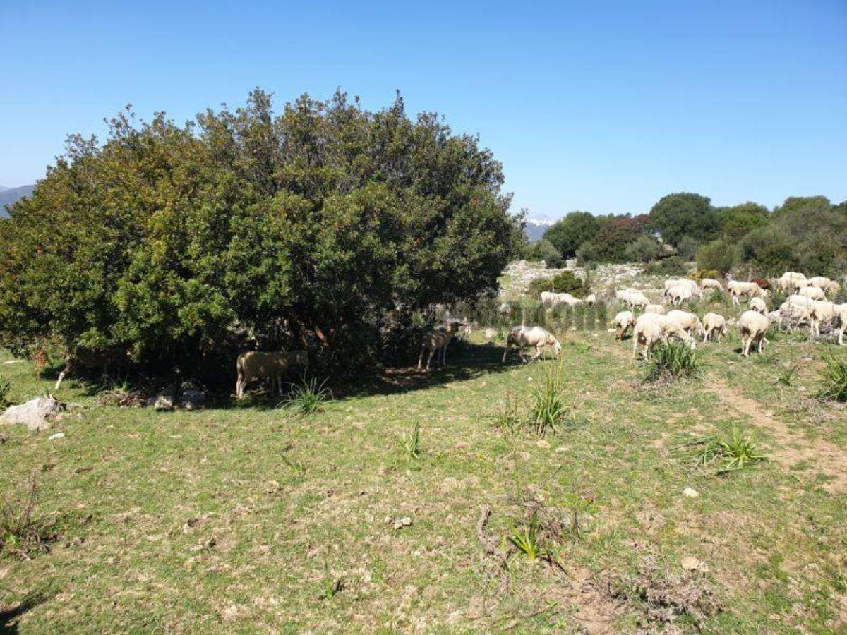 For sale of land in Casares