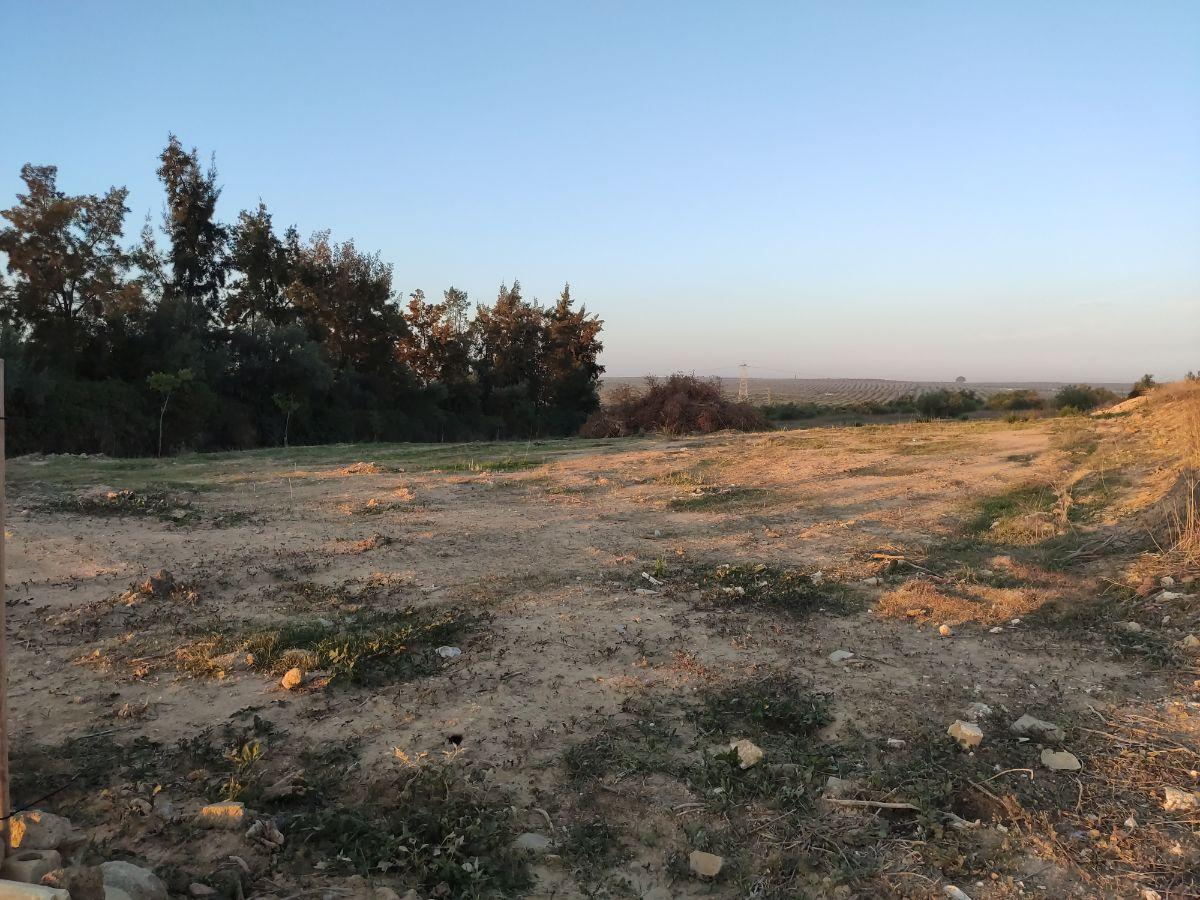 For sale of rural property in Bormujos