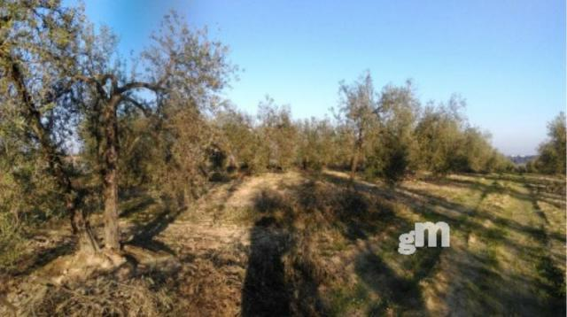 For sale of rural property in Pilas