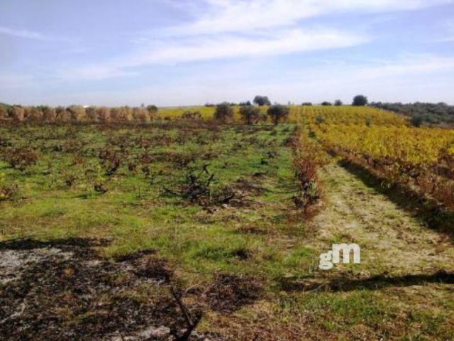 For sale of rural property in Bollullos Par del Condado