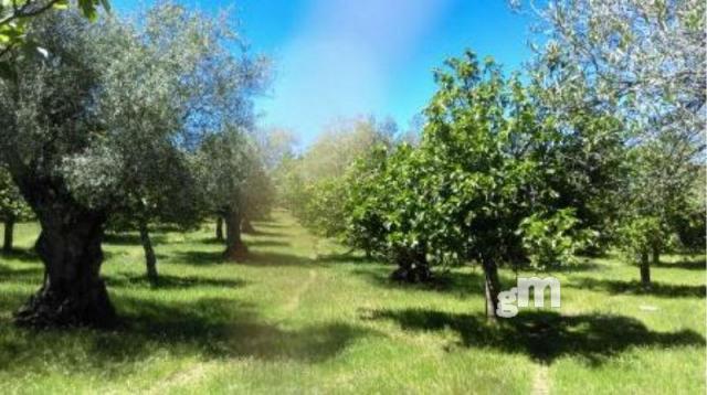 For sale of rural property in Segura de León