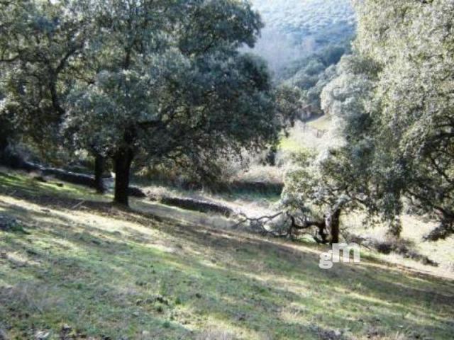Venta de finca rústica en Cabeza la Vaca