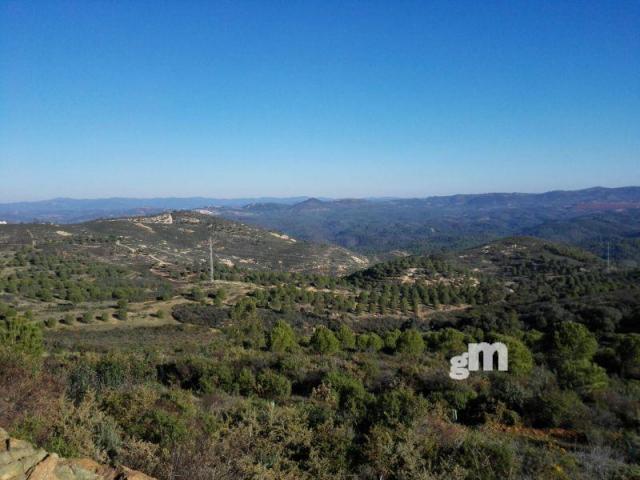 For sale of rural property in Zalamea la Real