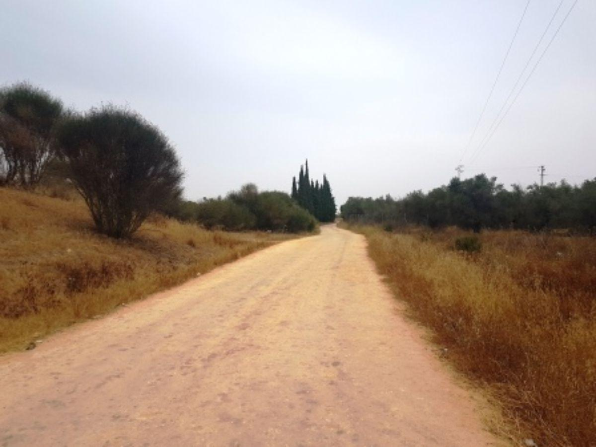 Venta de finca rústica en Mairena del Aljarafe