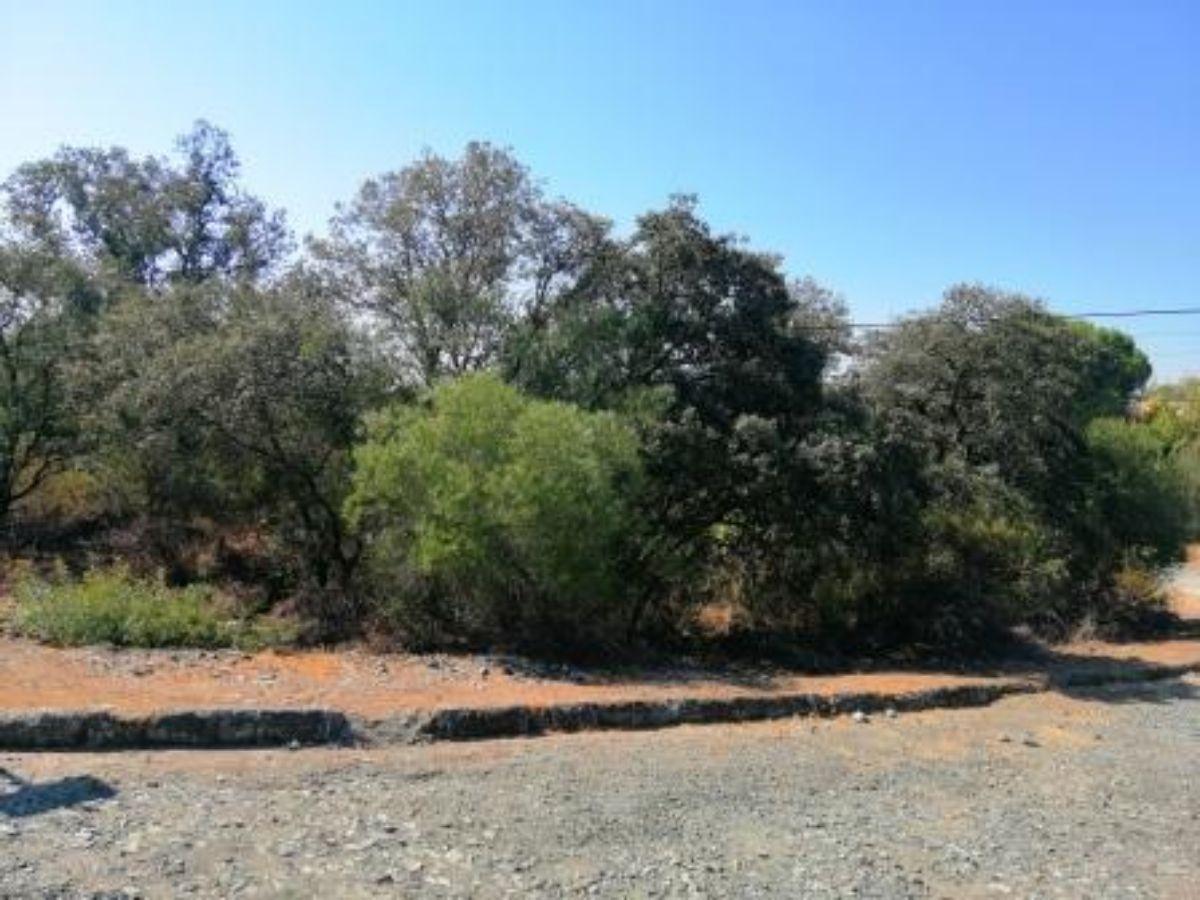 Venta de terreno en Guillena