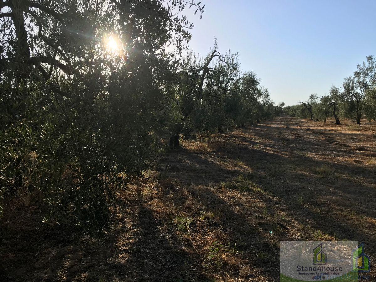 Vente de terrain dans Hinojos