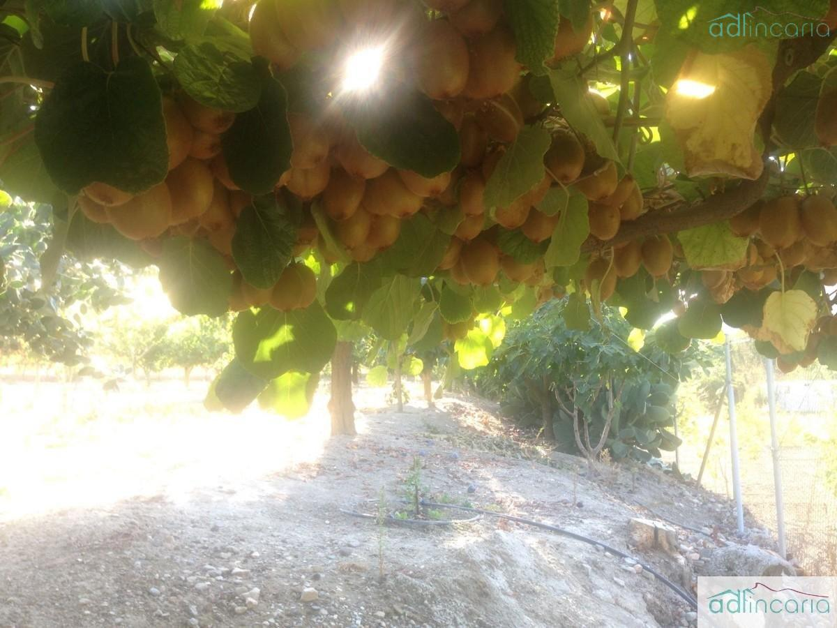 For sale of rural property in Pinos Genil