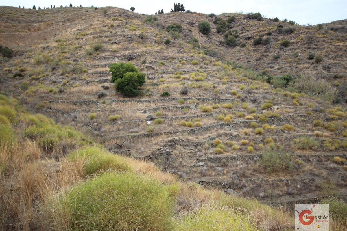 For sale of rural property in Itrabo