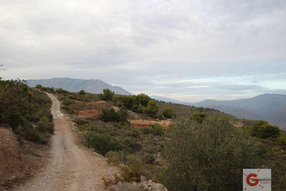 For sale of land in Gualchos