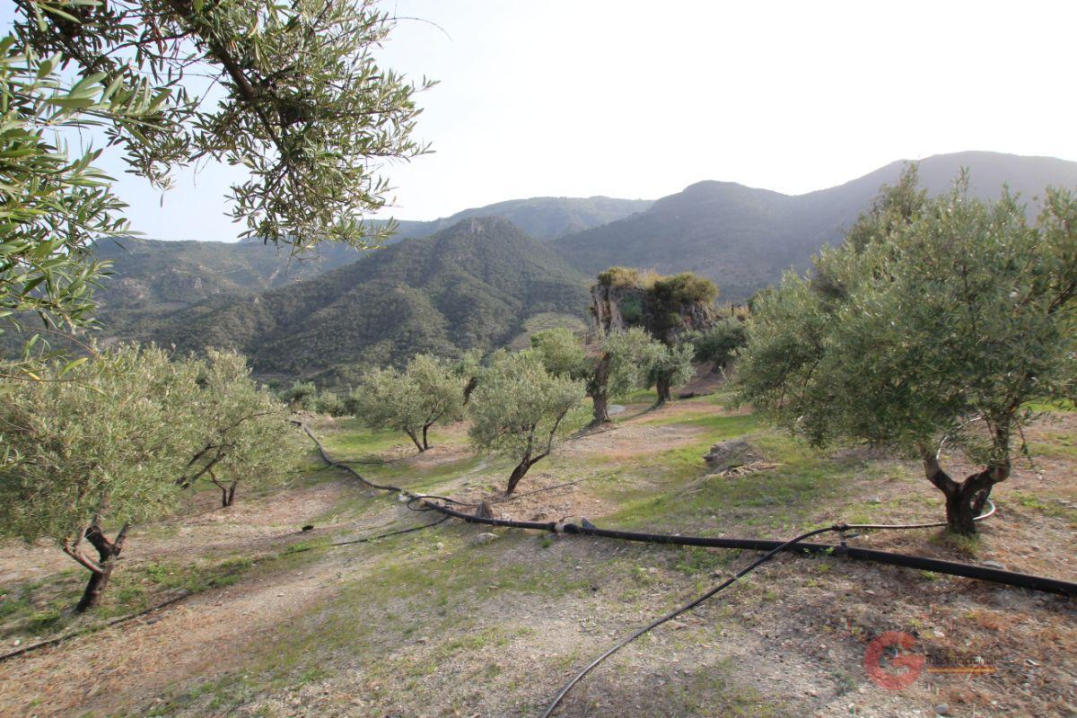 For sale of rural property in Guájar Faragüit