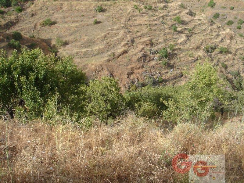 Venta de terreno en Almuñécar