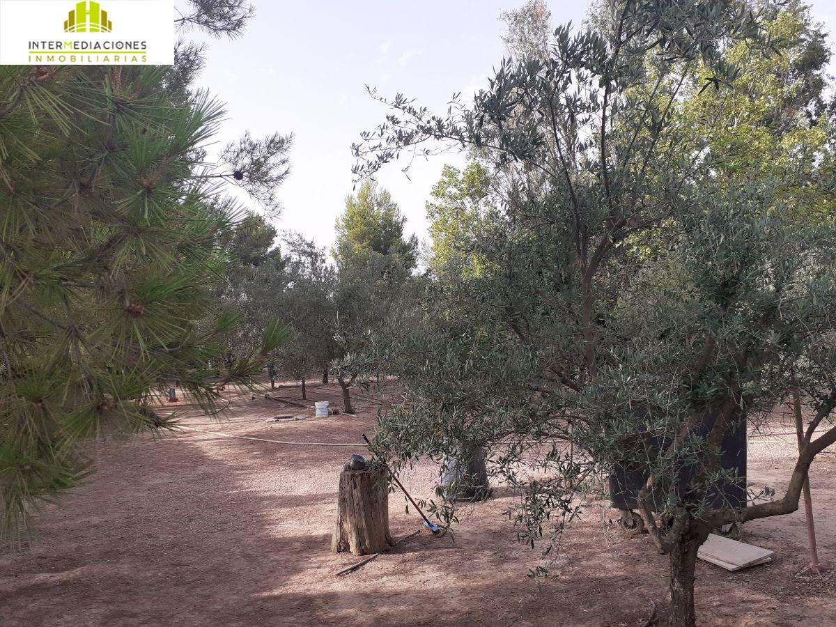 For sale of land in Albacete