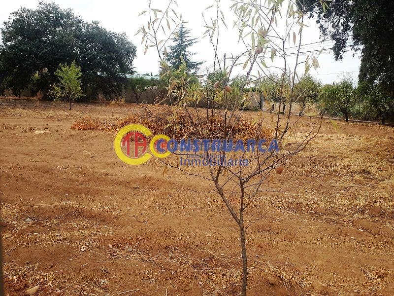 For sale of land in Pepino