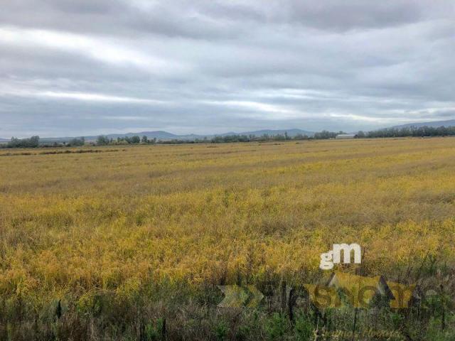 For sale of rural property in Santa Amalia