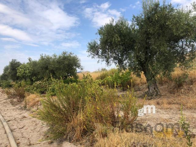 Venta de terreno en Santa Amalia