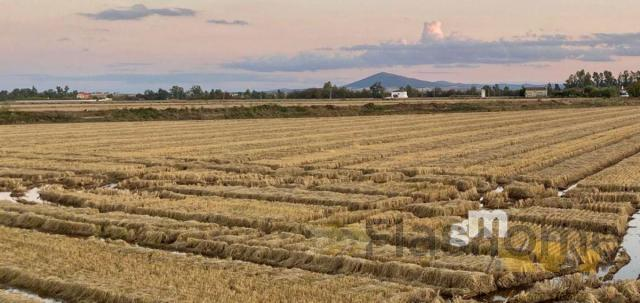 For sale of rural property in Yelbes