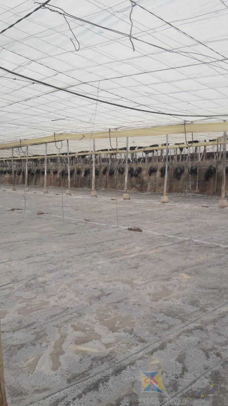 Venta de nave industrial en El Ejido