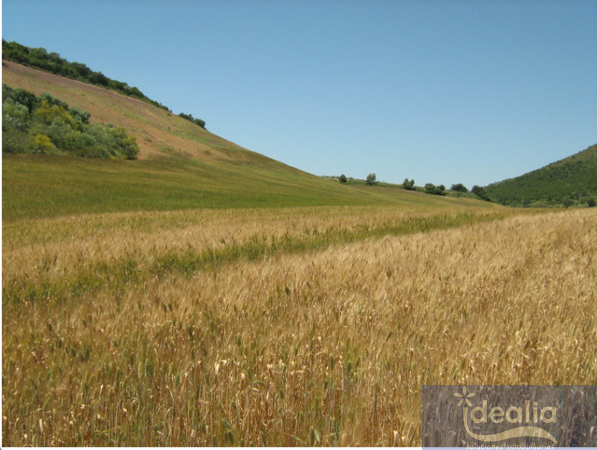 For sale of rural property in Montellano