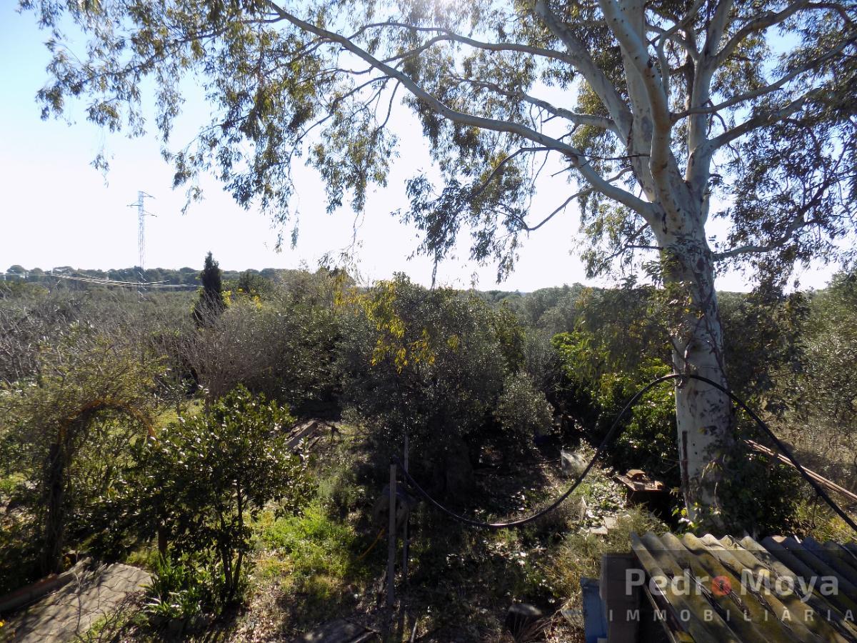 Venta de finca rústica en Montbrió del Camp