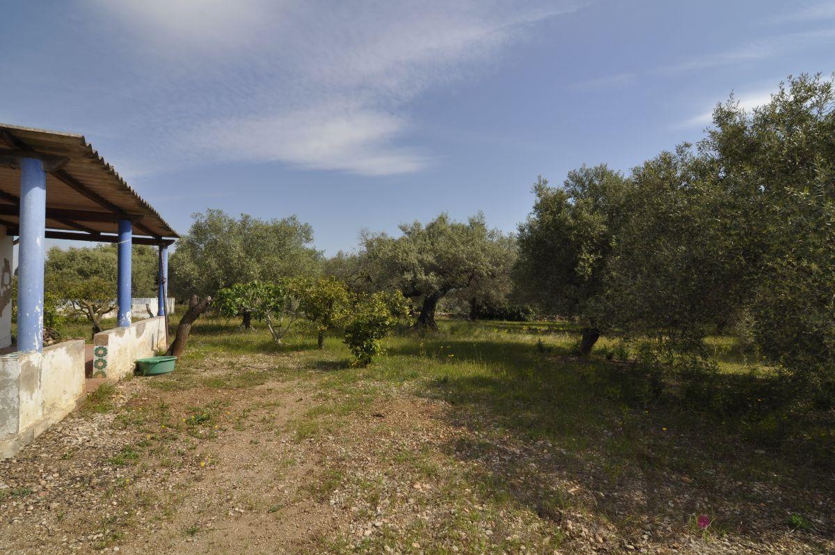 Köp av marken i Sant Carles de la Ràpita