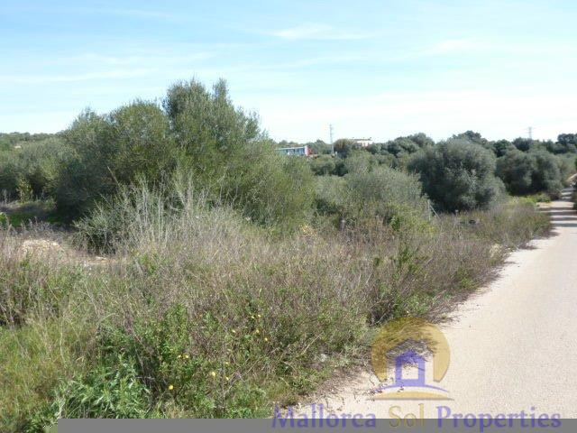 For sale of land in Manacor