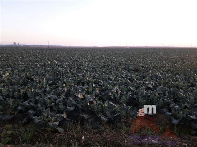 Venta de terreno en Mengabril