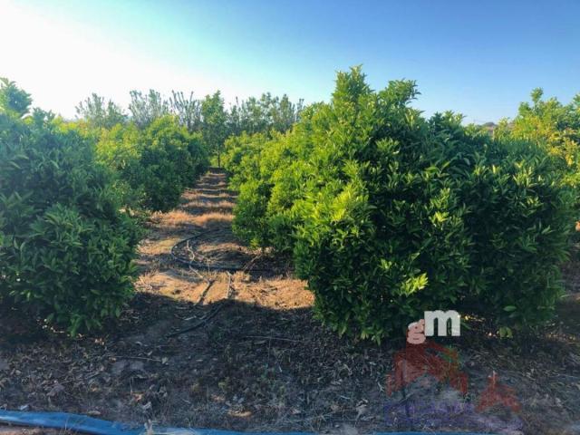 For sale of land in Santa Amalia