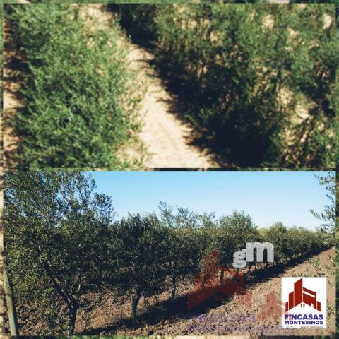 For sale of land in Palomas