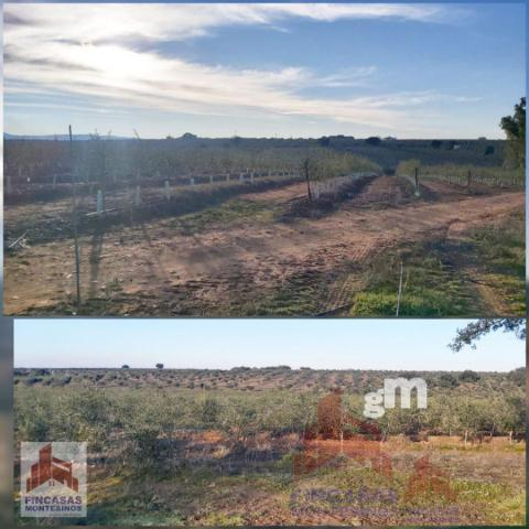 For sale of land in Guareña