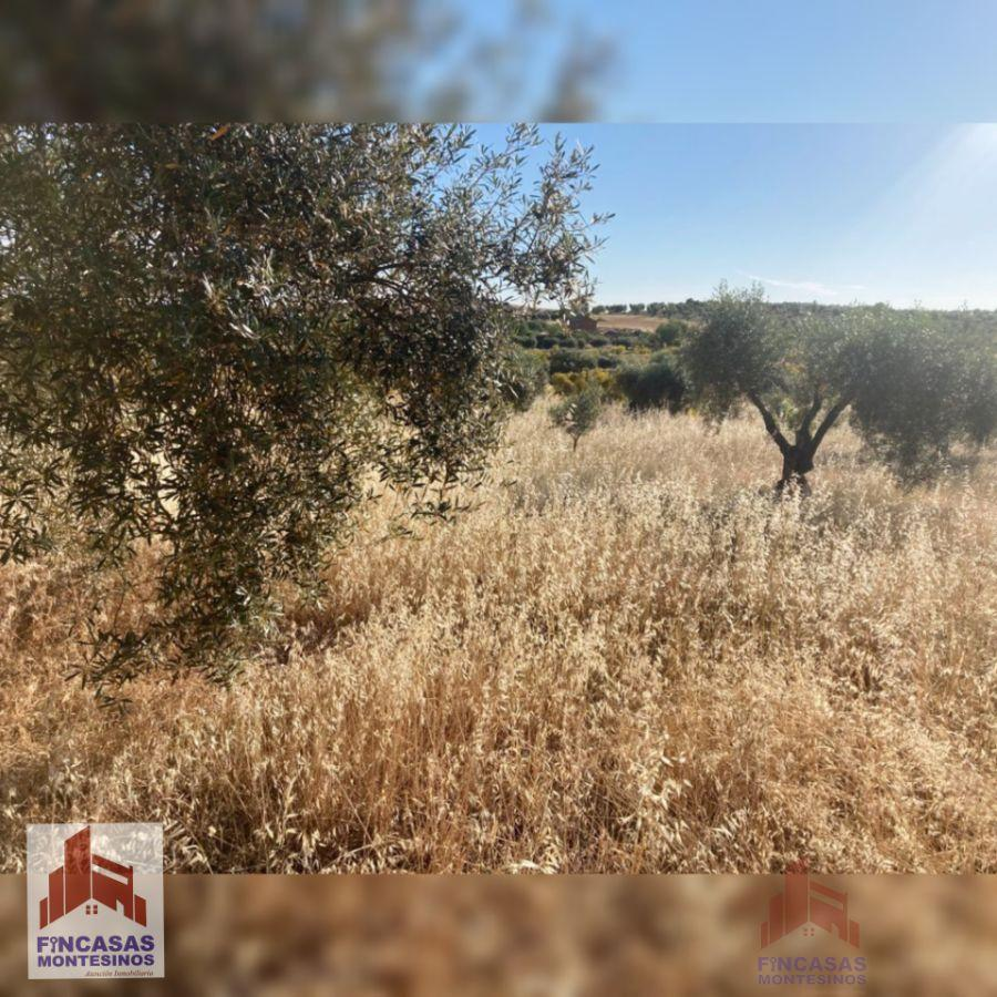 For sale of land in La Haba