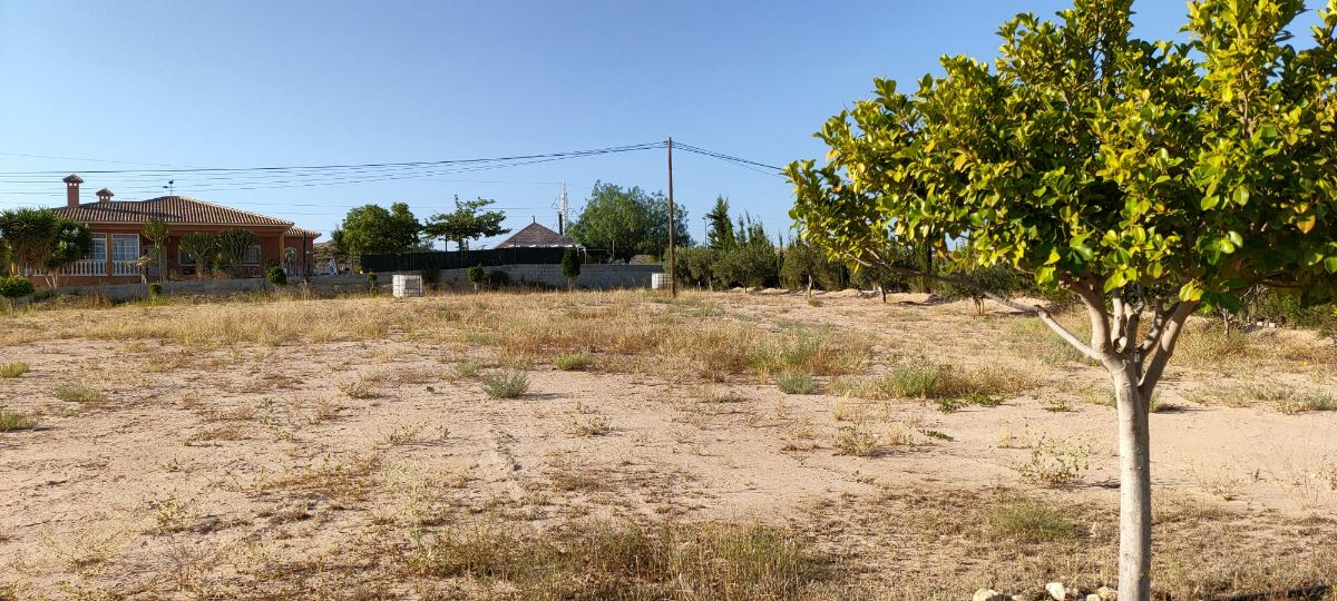 For sale of land in Elche-Elx