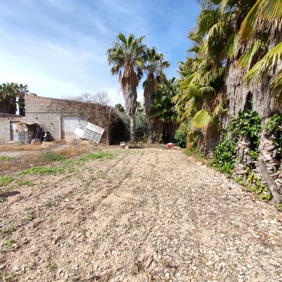 For sale of rural property in Novelda